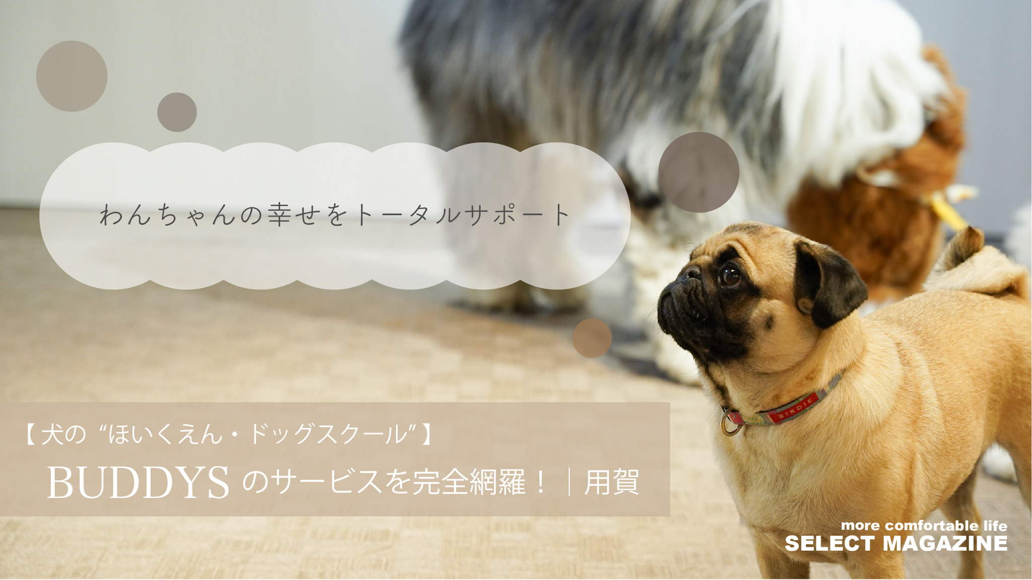 """【犬の""""ほいくえん・ドッグスクール""""】BUDDYSのサービスを完全網羅! 用賀"""
