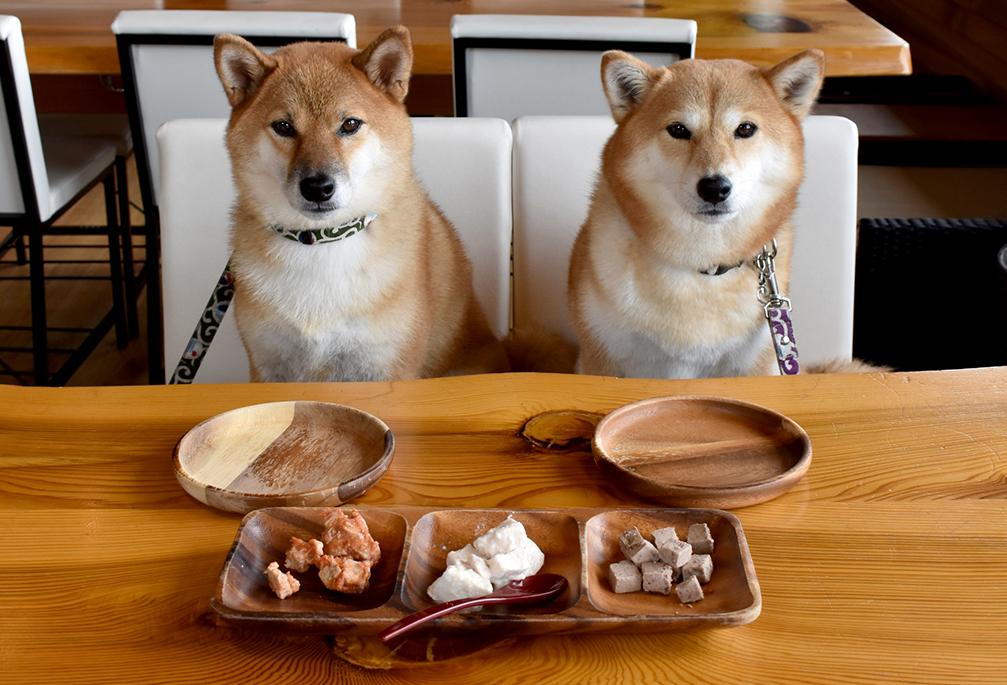 【渋谷区ペット可の料理店】ペット同伴OKな嬉しい飲食店オススメ3選♪
