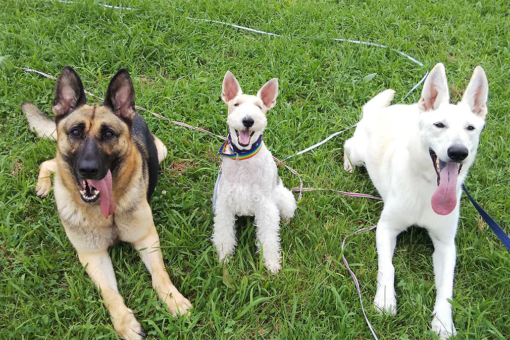 【わんちゃん目線で接してくれるわんちゃんのようちえん】 Dog Training Bloom| 溝の口