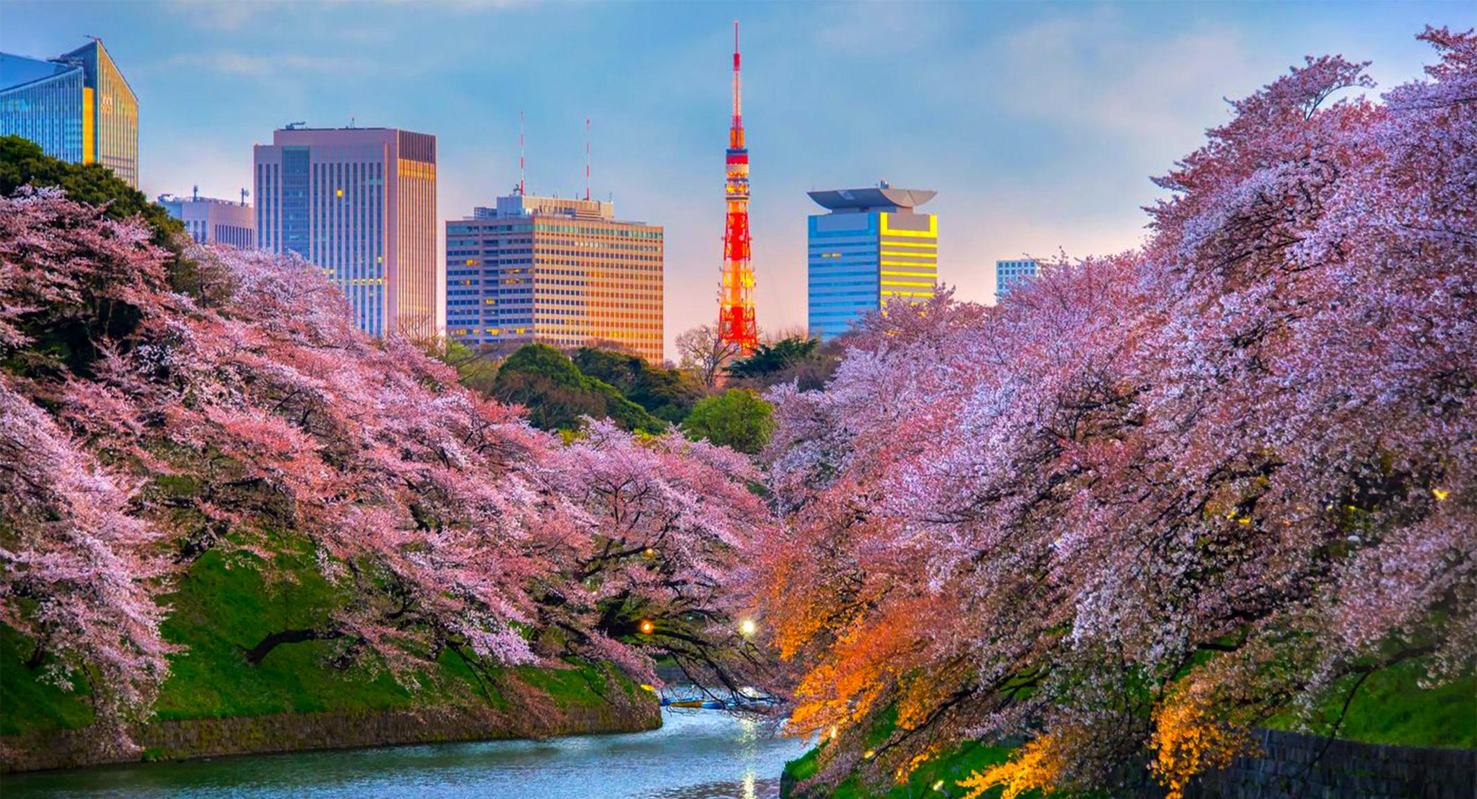 【東京で桜を見るならココ!】厳選5選