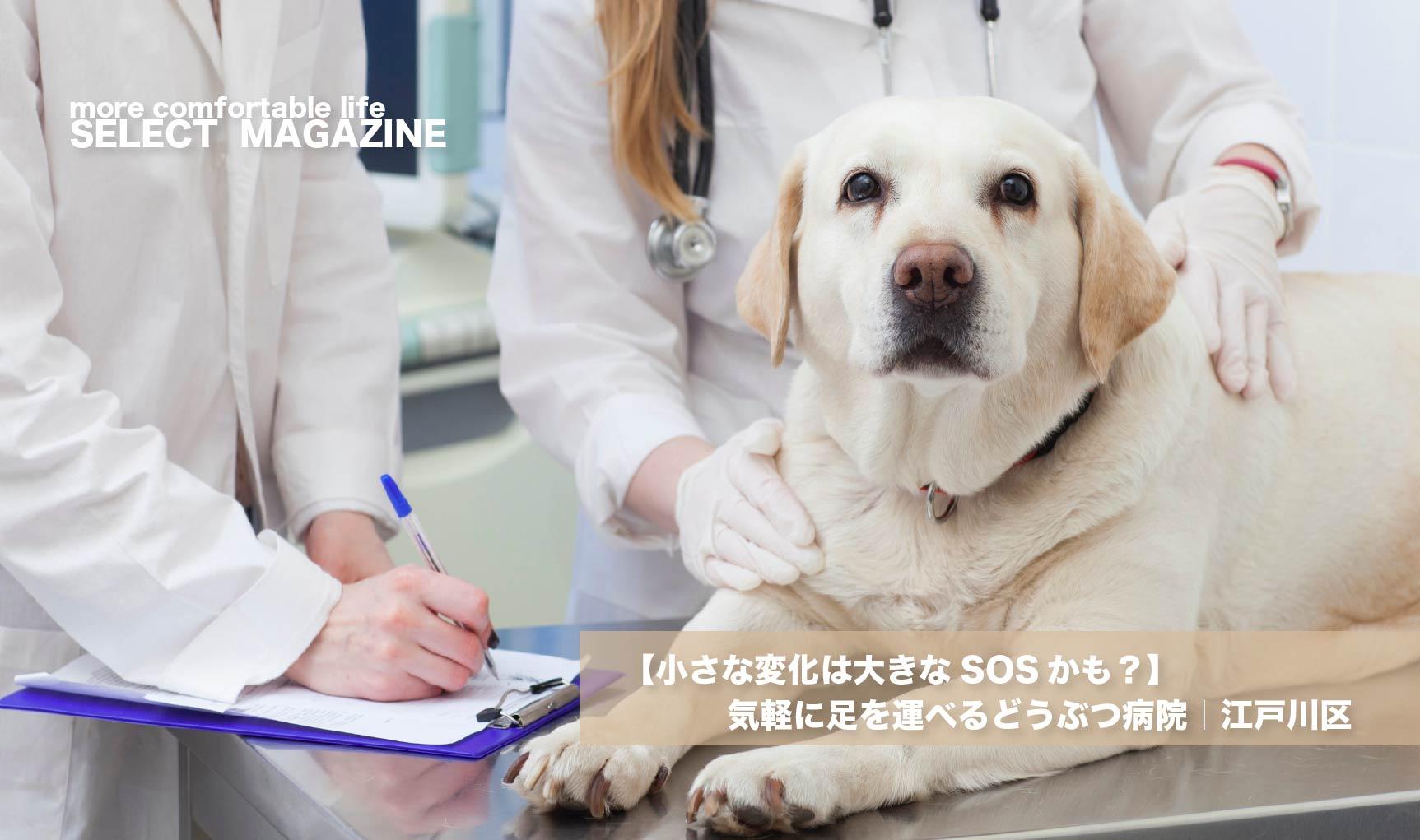【小さな変化は大きなSOSかも?】気軽に足を運べるどうぶつ病院|江戸川区